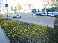 Tallinnan kevät oli parhaimmillaan